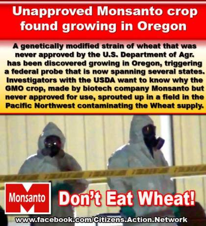 Don't Eat Wheat
