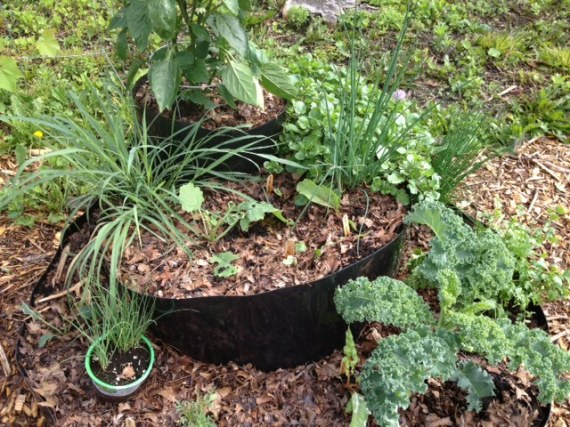 Leeks, chives, peppers, kale, ruby chard, parsley, watercress and a lone nasturtium
