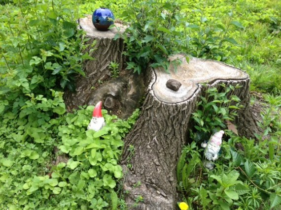 Wild Edibles and Gnomes
