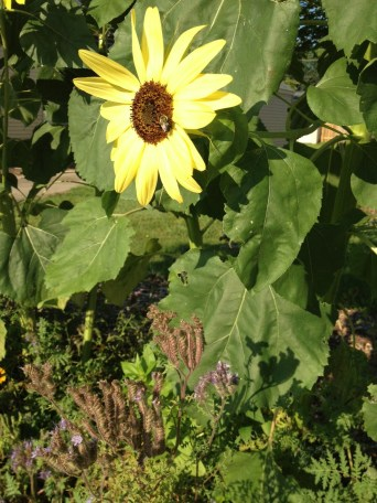 Whatever those flowers happen to be, though, they were part of a bee-friendly yet unknown mix of wildflowers I planted with my sunflowers. I literally have this part of Door Number 9 growing outside our house!