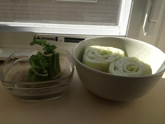 celery and bok choy