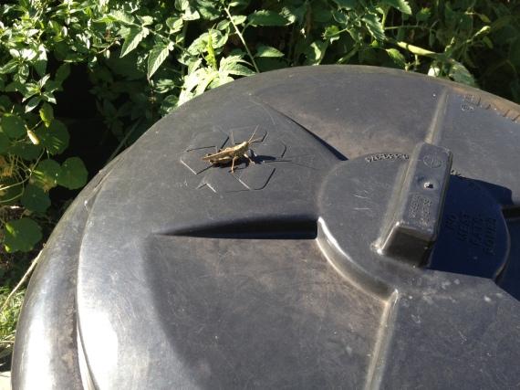 Grasshopper Recycles