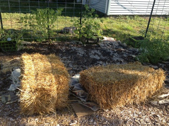 Straw bales and the new bed