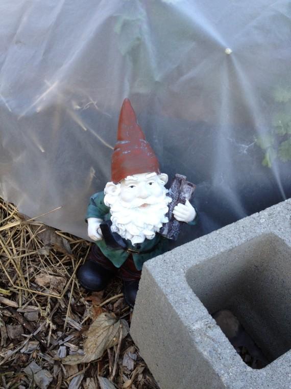 Mr. Gnome