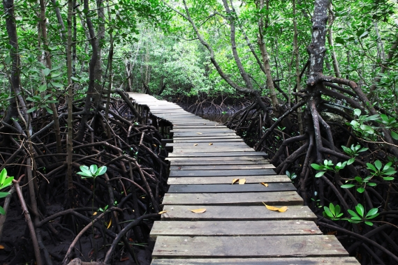 A file photo of a  green mangrove forest in Africa (Shutterstock) Read more: http://www.theepochtimes.com/n3/427555-real-evidence-of-mythical-creatures-hobbits-video/#ixzz2q6s2nlrI Follow us: @EpochTimes on Twitter | epochtimes on Facebook
