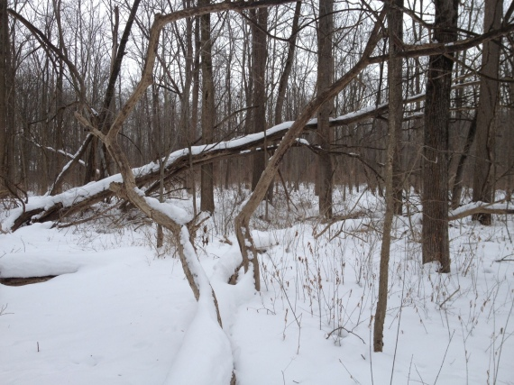 Goshen woods February 17