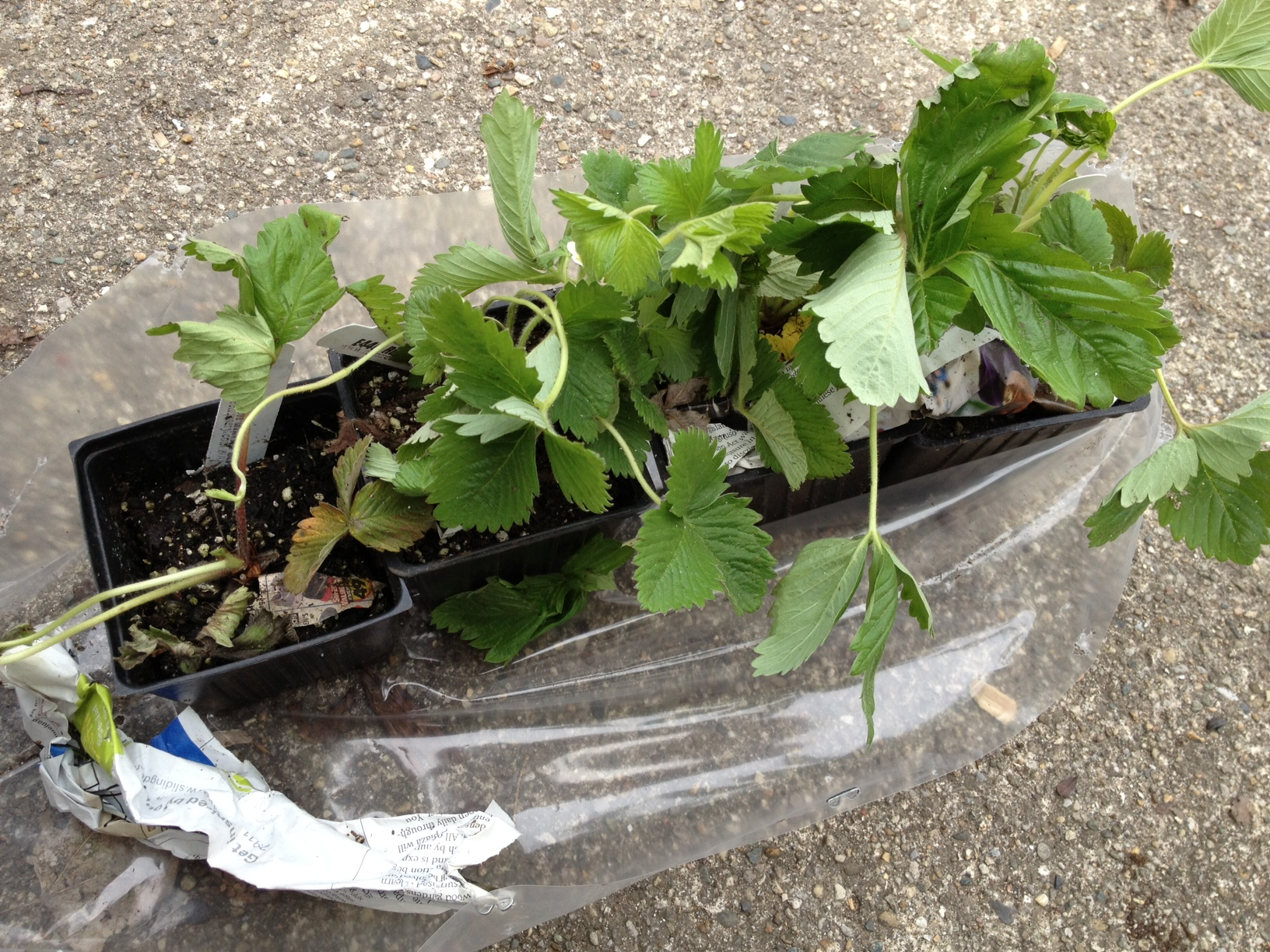 Earth Day Gardening Update Laura Bruno 39 S Blog
