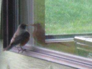 Bird at window