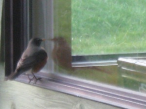 Bird at window