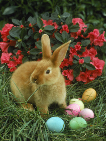 The Origin of Easter's Symbols and Sacred Objects Bunny-eggs