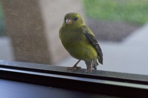 Lance's bird 2