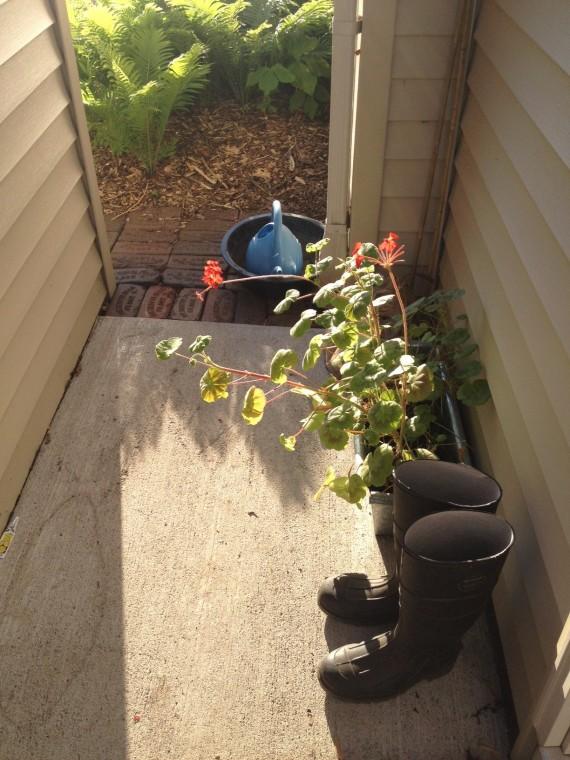 backdoor gardening