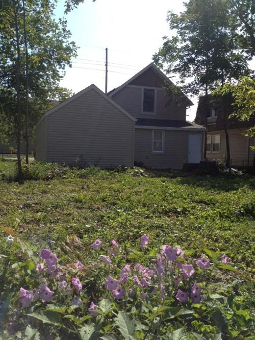 backyard August 2012