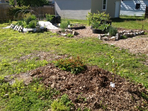 beds with aronia berries