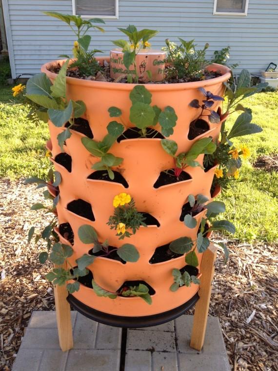 Garden Tower growing well