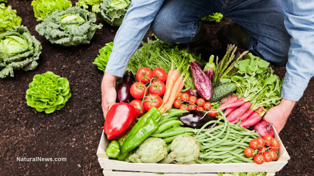 Farmer-Gardener-Harvest-Crops-Vegetables-Soil