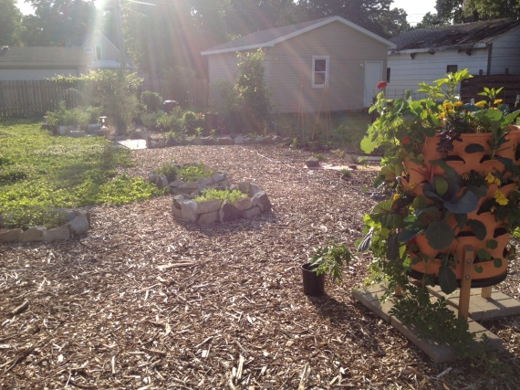 I love the afternoon light in the backyard! (And yes, that busted out garage roof has inspired much of my vertical gardening. Little do the neighbors know, but they will soon be getting paw paw trees, too, if I have anything to do with it. There's more than one way to hide an eyesore!)