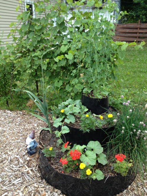 A nearby InstaBed with peas, cucumbers, cantaloupe, geraniums, garlic, marigolds, chives and calypso bush beans ... with lovage and a trellised grape vine in the background.