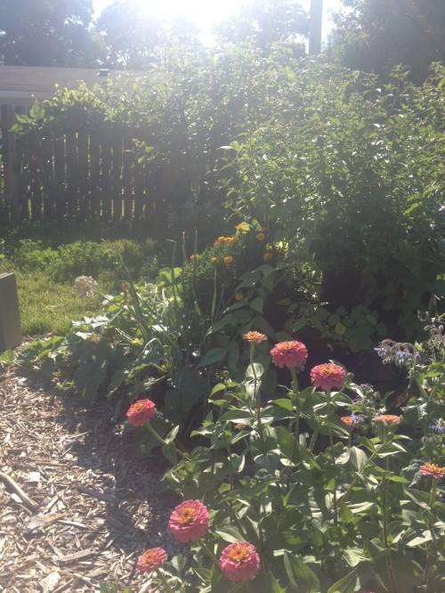 back gardens 7-13