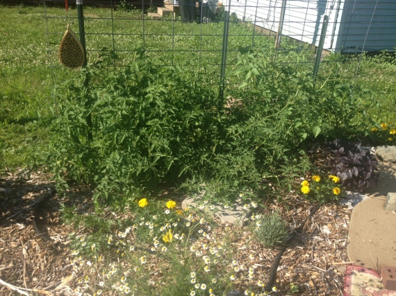 more maters 7-13