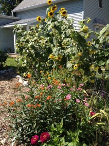 At least the butterfly garden up front distracts attention from the mulch. :)