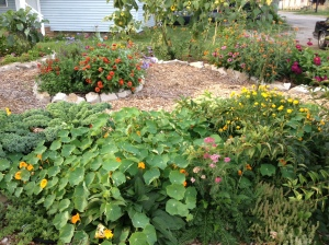 Another angle of the front beds. The nasturtiums, kale and sedum are loving the pre-autumnal weather.