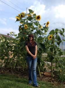 And these crazy tall sunflowers bloomed just as the Lemon Queen ones started looking spent.