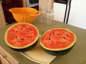 First ripe watermelon: a Russian variety called Small Shining Light. At first I thought it was just OK. Then I refrigerated it. OMG! Heaven! Also delicious blended with the rind into a refreshing smoothie.