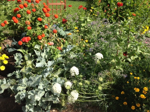 Riotous abundance, including some of the carrots I've let flower (the white umbrels)