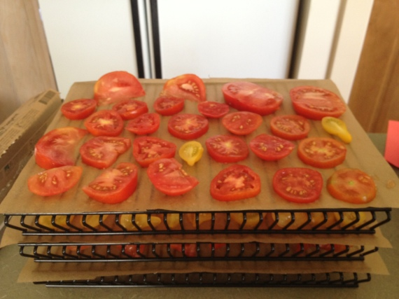 Homegrown tomatoes awaiting transformation into truly sun dried tomatoes