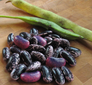 The pink-and-purple beans are from green pods.