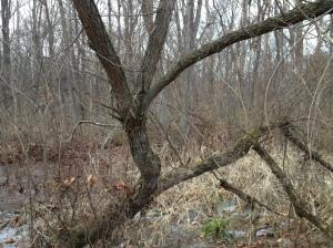 Rune Tree