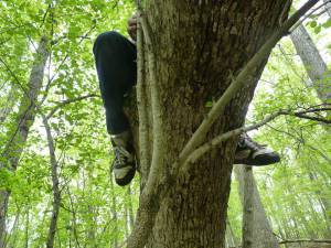 Tree climbing = one great way to commune!