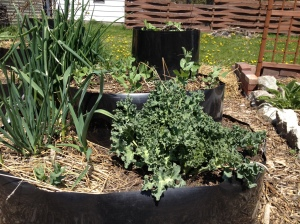 cover crop and perennials