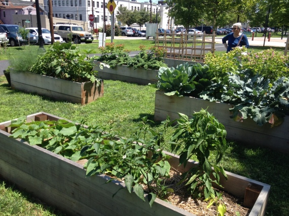 raised beds with Mom