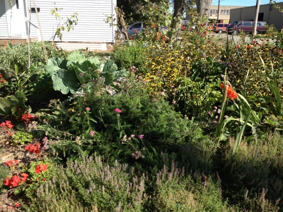 front yard garden with chard, eggplants, collards, thyme, lemon balm and more