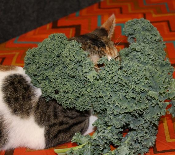 Sasha loves kale!