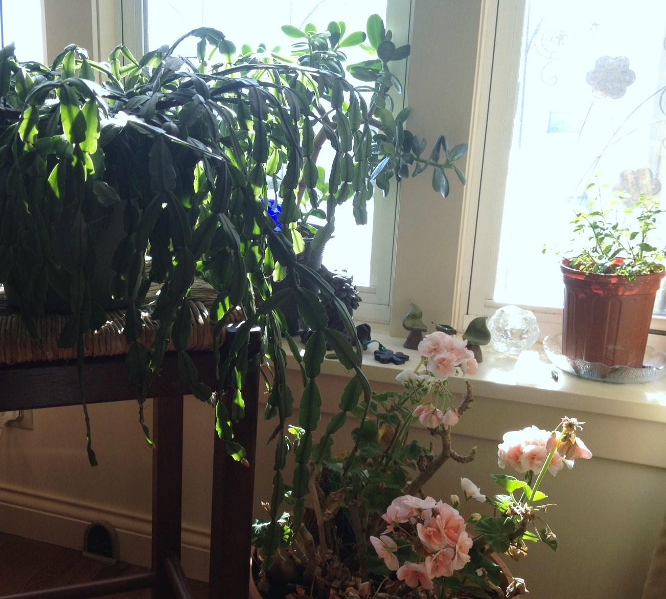 tags indoor winter garden - photo #26