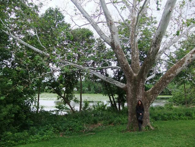 Laura Avalon Tree 2