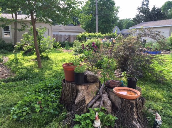 May 2016 contrast of back yard stump