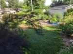 backyard forest garden