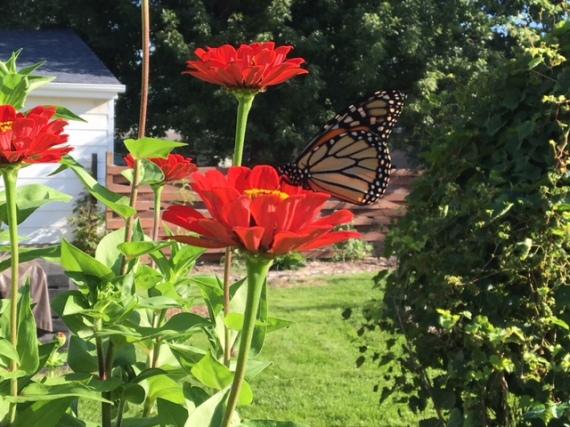 butterfly season - Garden Tower Project