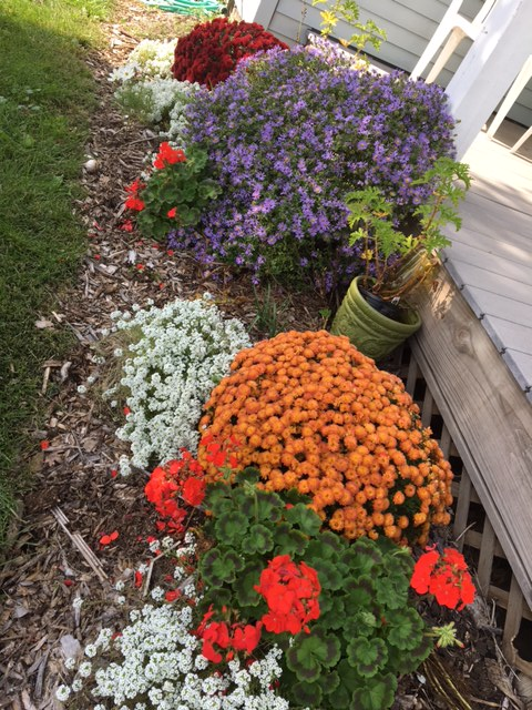 mums-and-asters